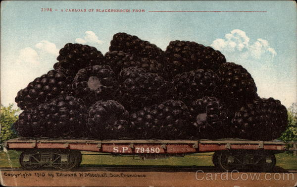 A Carload of Blackberris From Fruit Exaggeration