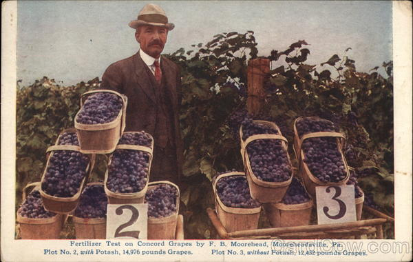 Fertilizer Test on Concord Grapes by F.B. Moorehead Mooreheadsville Pennsylvania