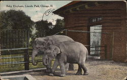 Baby Elephants, Lincoln Park