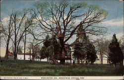 Washington Oak, Brandywine Springs Park