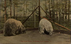 The Polar Bears, Walbridge Park