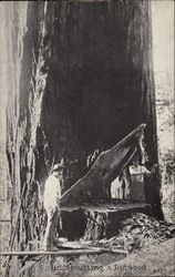 Undercutting a Redwood