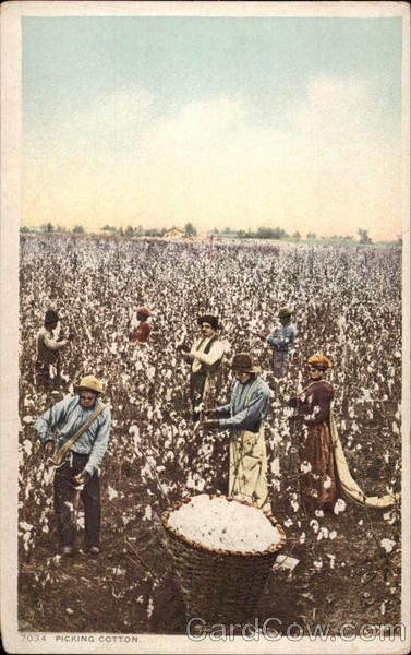 Picking Cotton Farming