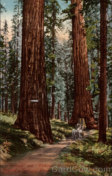 Vermont and Wawona Mariposa Big Tree Redwood Park California
