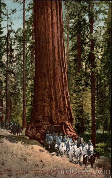 Big Tree Wawona; road of a thousand wonders, Southern Pacific, Co California