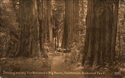 Driving Among the Redwoods