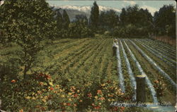 An Irrigated Garden