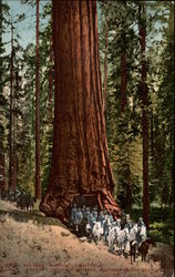 Big Tree Wawona; road of a thousand wonders, Southern Pacific, Co