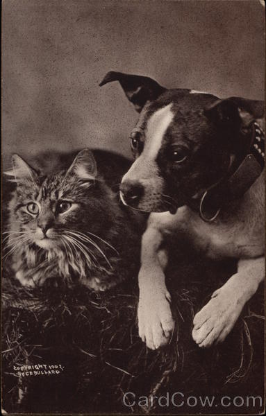 Tabby cat, and dog with white stripe on nose