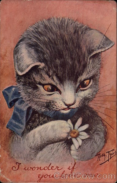 Cat with a blue ribbon around his neck looking at a daisy