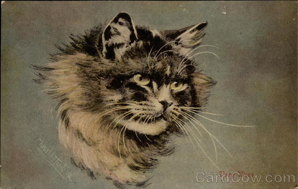 Portrait of a Cat - Very Wise Muriel Hunt Cats