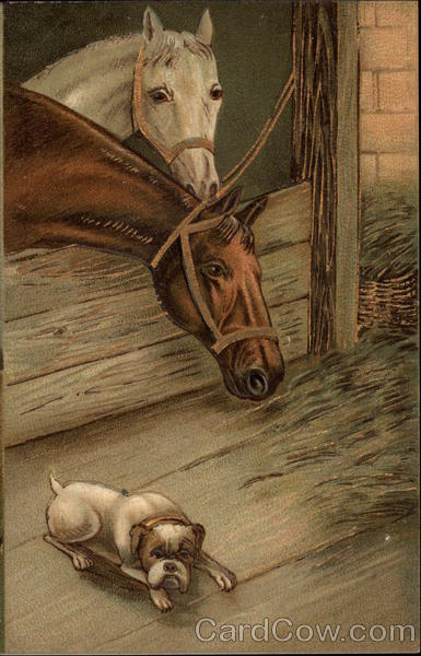 Two horses in a stable with dog on floor