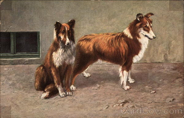 Two Long-Haired Collies Wait on the Sidewalk Dogs