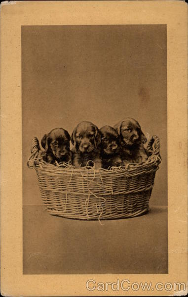 Puppies in a Basket Dogs