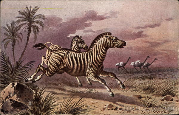 Zebras Running with Ostriches in DIstance Multiple Animals