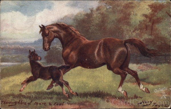 Thoroughbred Mare and Foal Horses
