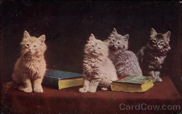 Four kittens on table with two books Cats