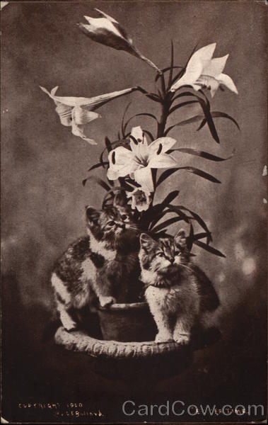 Kittens with Easter Lily