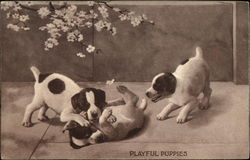 Three Puppies Playing
