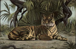 A tiger laying in the jungle