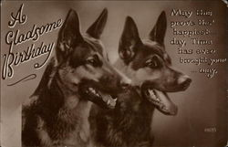 Close up of two german shepherds