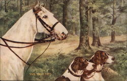A white horse and two dogs in the woods