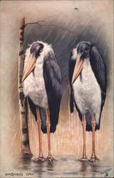 Storks - Washing Day - Animal Expressions