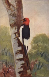 Woodpecker on a tree