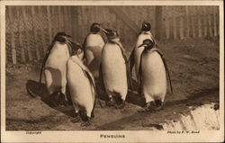 A group of six penguins at the London Zoo