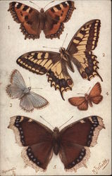 5 British Butterflies