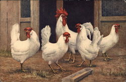 White Rooster and Chickens