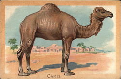 A camel standing in the desert with a building in the background