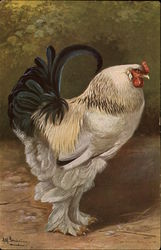 Large Rooster