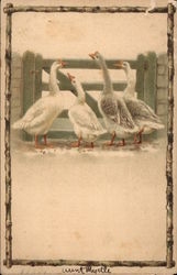Four geese looking over a gate