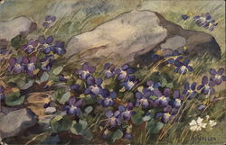 Violets in a Field