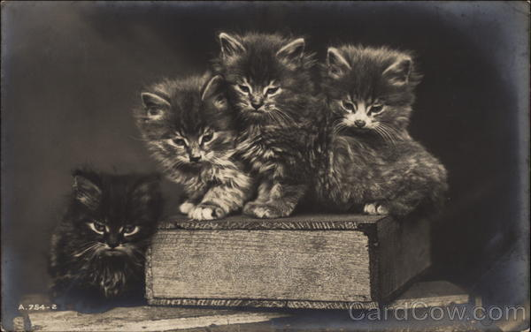 Kittens Sitting on a Book Cats