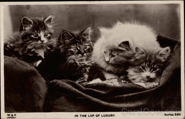 In the Lap of Luxury Cats