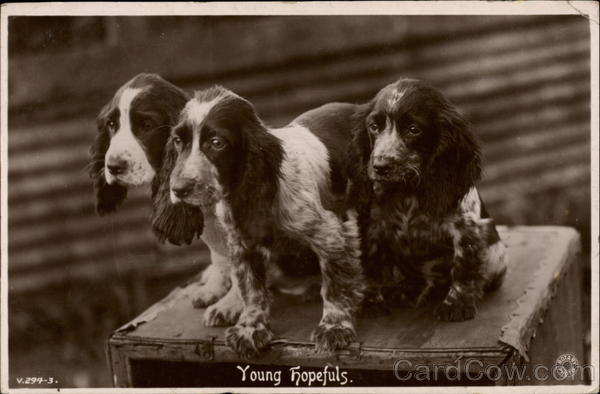 Young Hopefuls Dogs