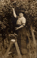 Garnett Orange Grove - Emma Snyder Picking Oranges