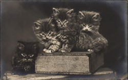 Kittens Sitting on a Book
