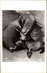Sea Lion Cow and Pup, Sea Lion Caves