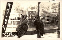 A Pair of Night Owls Postcard