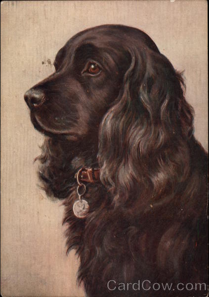 The Cocker Spaniel Dogs