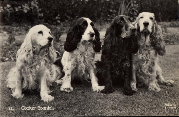 Cocker Spaniels E. Poore Dogs