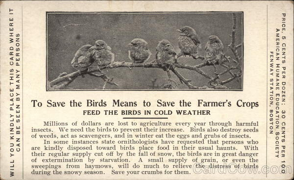 To Save the Birds Means to Save the Farmer's Crops