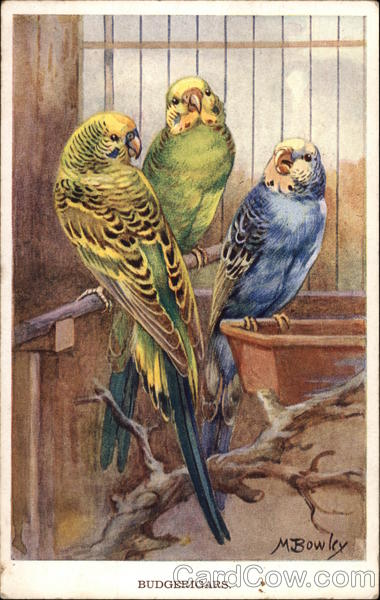 Three Budgies in a Cage Birds