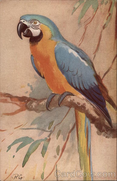 The Blue & Yellow Macaw R.G Birds