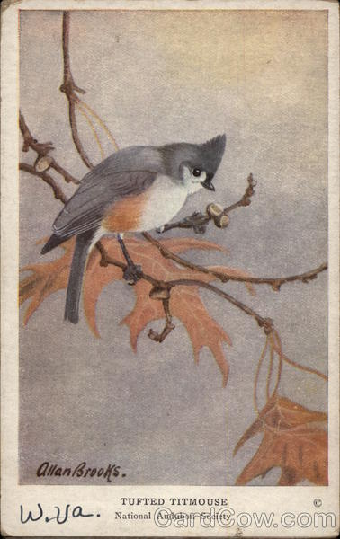 Tufted Titmouse Allan Brooks Birds