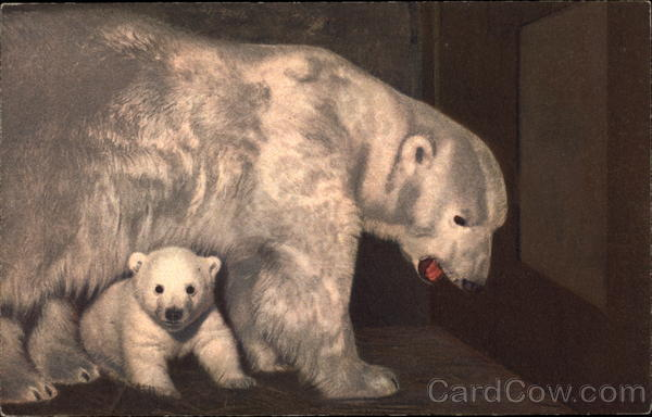 Polar Bear and Cub Bears