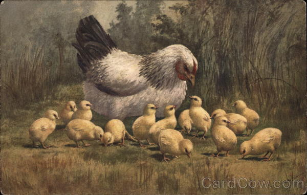 Mother Hen with Fourteen Chicks Birds